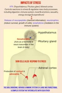 Stress impacts healthy skin LAJOIE SKIN